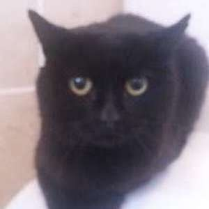 Found: Male black cat found Porthcawl