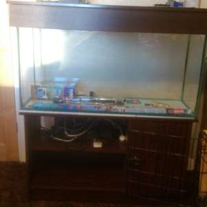 For sale: Fish tank - £50