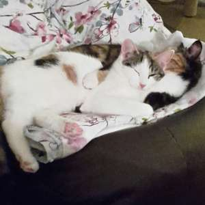 Lost: Lost young female cat Lower Edge Road Rastrick