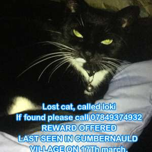 Lost: LOKI the cat missing from CUMBERNAULD VILLAGE