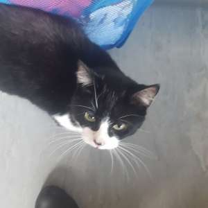 Lost: Black and white female cat, worsbrough common area