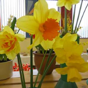 Old Catton Horticultural Club Spring Show