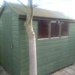 For sale: Wooden garden shed 8x5ft apex roof door on gable end,windows on one side. Collect from tickhill - £50
